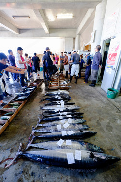 Fish Auctions - Okinawa