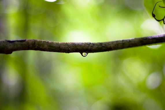 Amazon Droplets