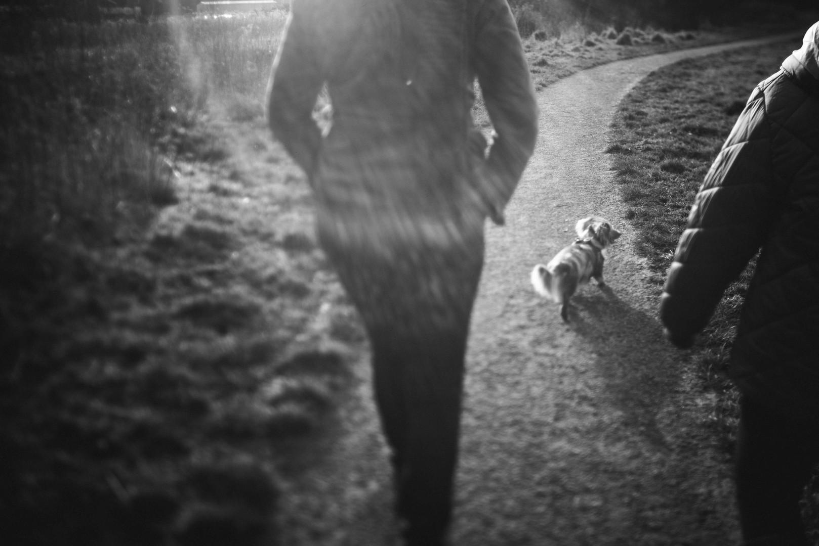 A walk in the park. Beautiful sun flare.