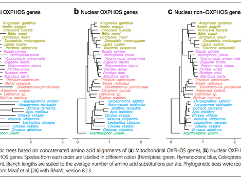 Evolutionary dynamics of OXPHOS genes in Hymenoptera