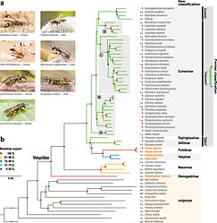 1KITE-Hymenoptera-Vespidae_Bank et al. 2