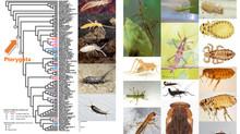 How did genes evolve when insects learned to fly?