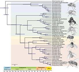 1KITE-Diptera-Acroceridae_Gillung et al.