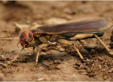 Insects started flying on land