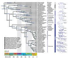 Song H et al. 2020_1KITE Orthoptera.jpg