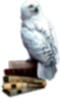 Hedwig_books.png