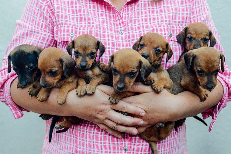 generic puppy 4.jpg