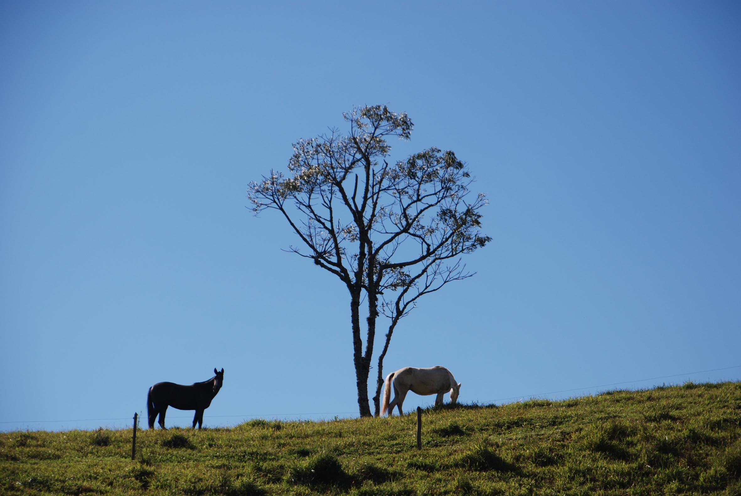 cavalos4.jpg