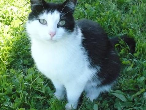 История кошки  Дуси