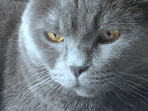 Наш тихий кот по имени Тиша.