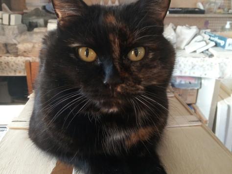Наша кошка по имени Рысь