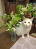 Повесть о коте Мише