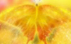 gele vlinder-wallpaper.jpg