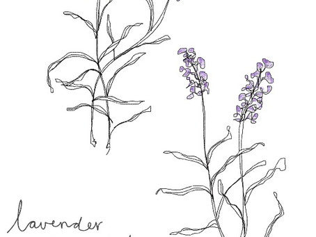 A love of Lavender...