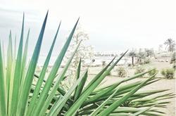 Playa del Torreón