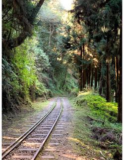Taiwan-Rail Forest