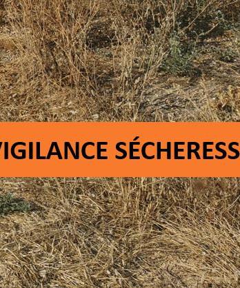 La Haute-Corse placée en vigilance sécheresse
