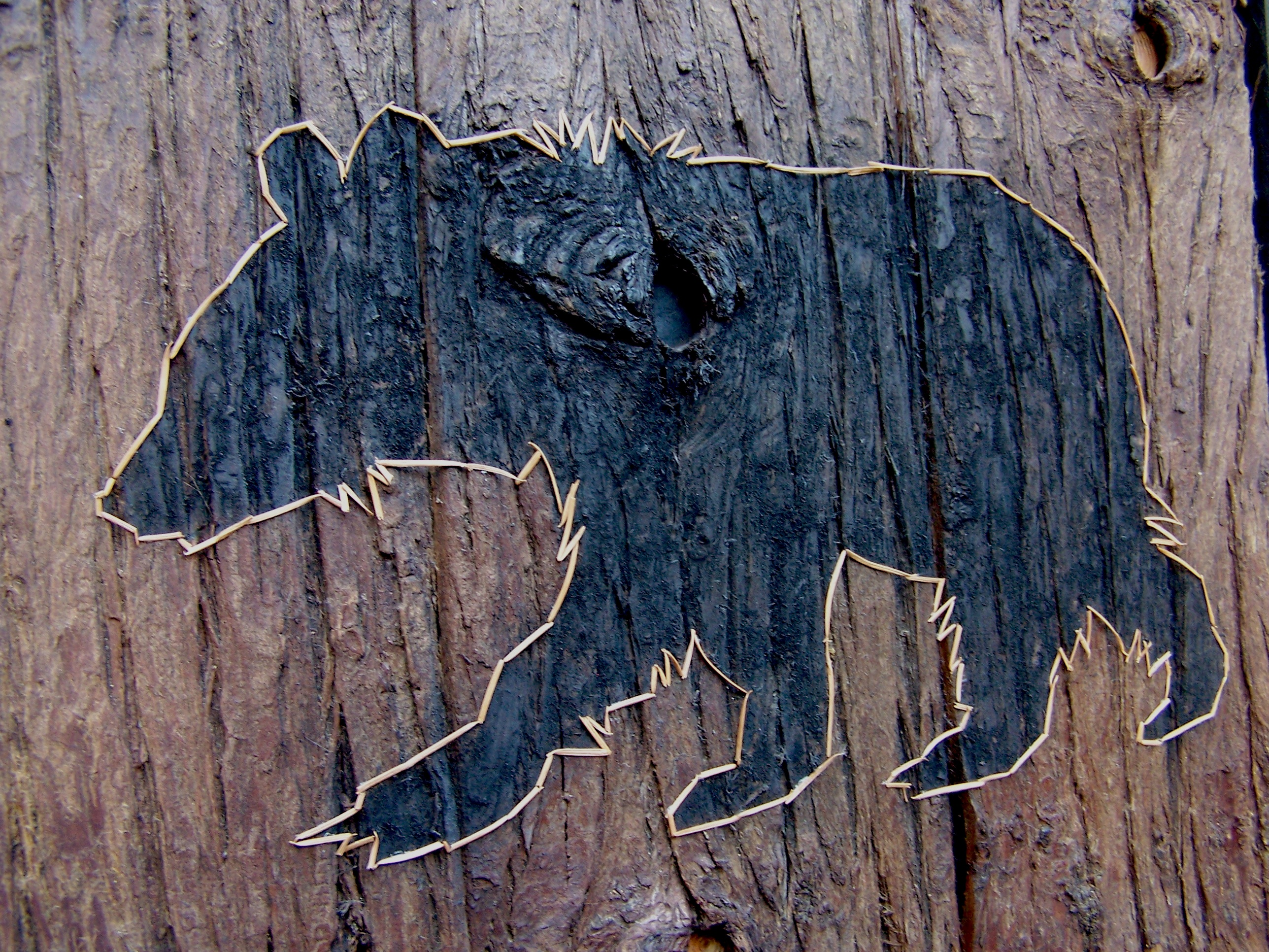Black Bear 29 x 29 in