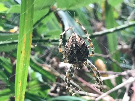 Endlich keine Angst vor Spinnen!