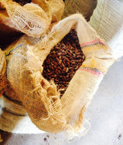 beans|chile|cacao