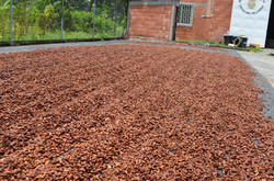 cacao|nibs|chile