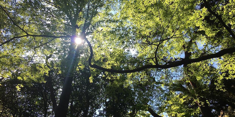 フラワーエッセンスワークショップ 『木のエッセンスについて学ぼう』
