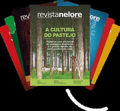 revistas site.png