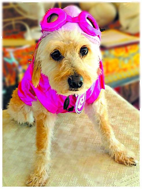 Chloe superdog_edited_edited.jpg