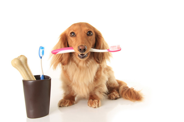 Dog with toothbrush in it's mouth