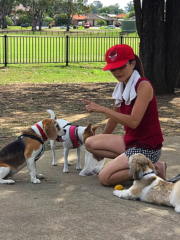 Dog walker with three dogs in the park