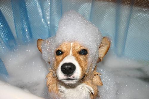 Small puppy in bubble bath