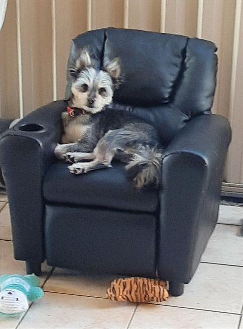 Lush Pet Care Dog Day Care