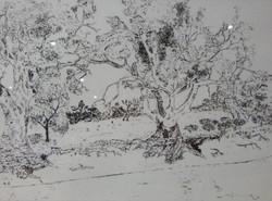Redgums on Darling River