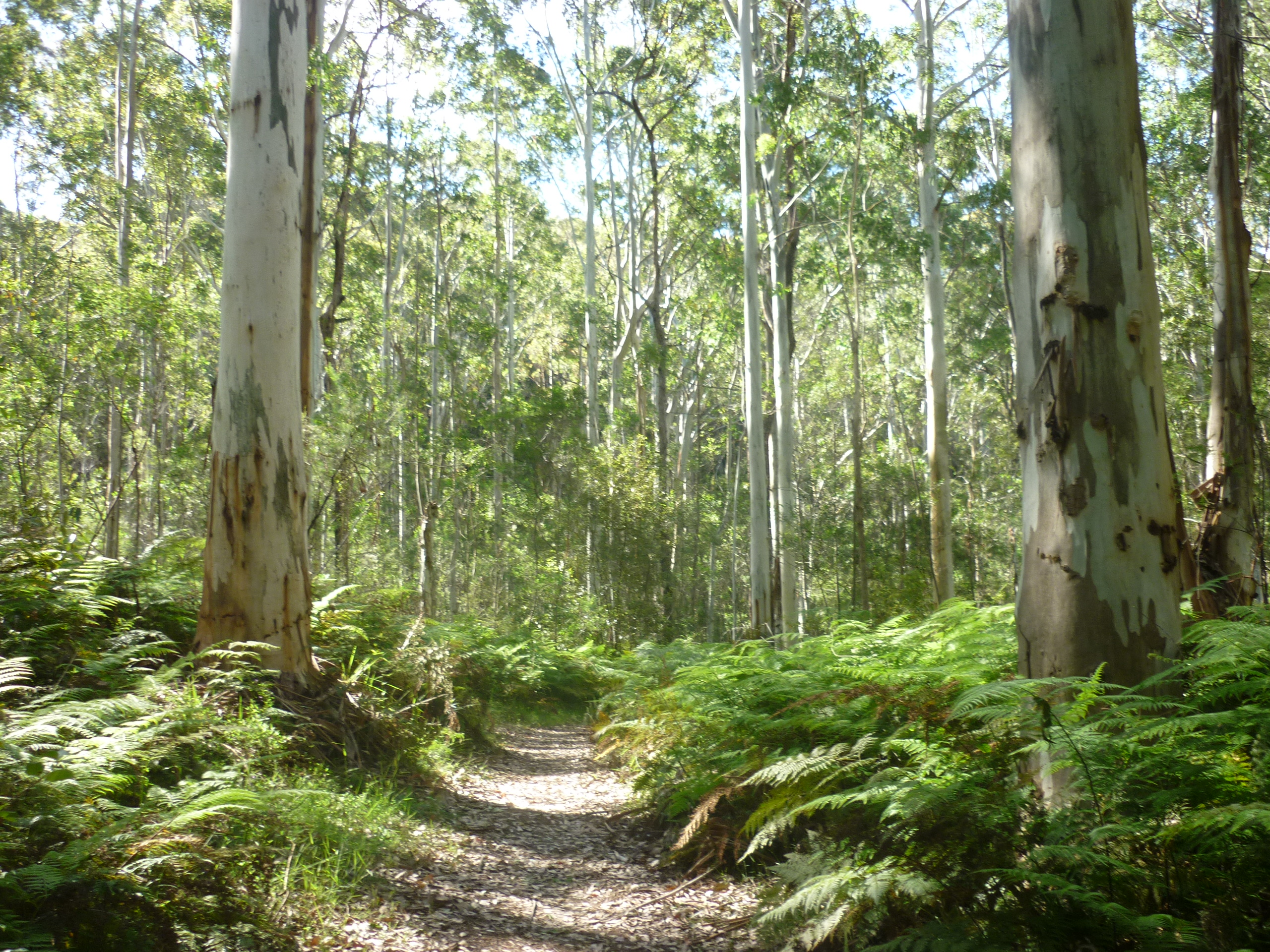 Bluegum Swamp, Winmalee