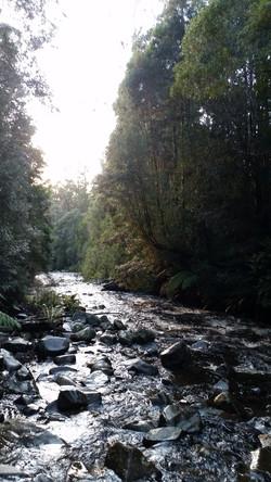 Arve River, Tahune forests SE TAS