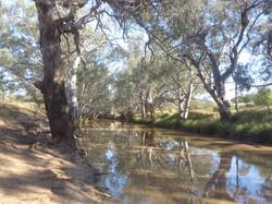 Bogan River, Bulgandramine, PeakHill
