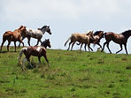 Moon Mountain Sanctuary Horses
