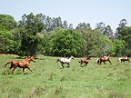 Moon Mountain Sanctuary Brumbies & Domestic Herd