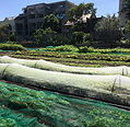 rda-sydney-city-greening-urban-agricultu