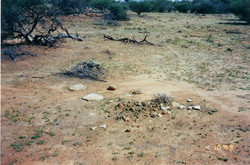 Campsite, Mutawingee, Western NSW
