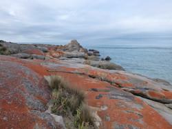Flinders Isld granite