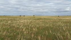 Oolambeyan NP, Hay plains