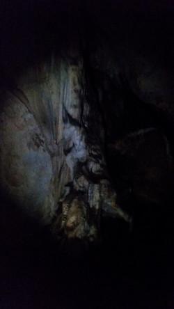 Bat Colony - Timor Caves NSW