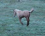 Sali Horse @ Moon Mountain Sanctuary