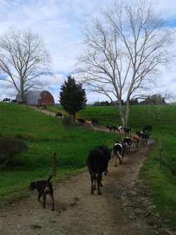 River Round Farms