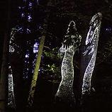 Schattenwald – Eine poetische Reise in den dunklen Wald