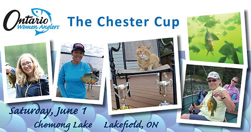 OWA Chester Cup 2019 banner.jpg
