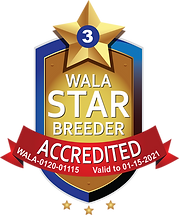 Maple Lane WALA Star Logo--0120-01115.pn