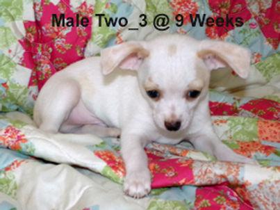 Male Two_3.jpg