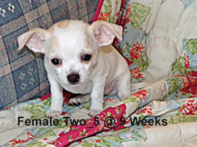 Female Two_5.jpg